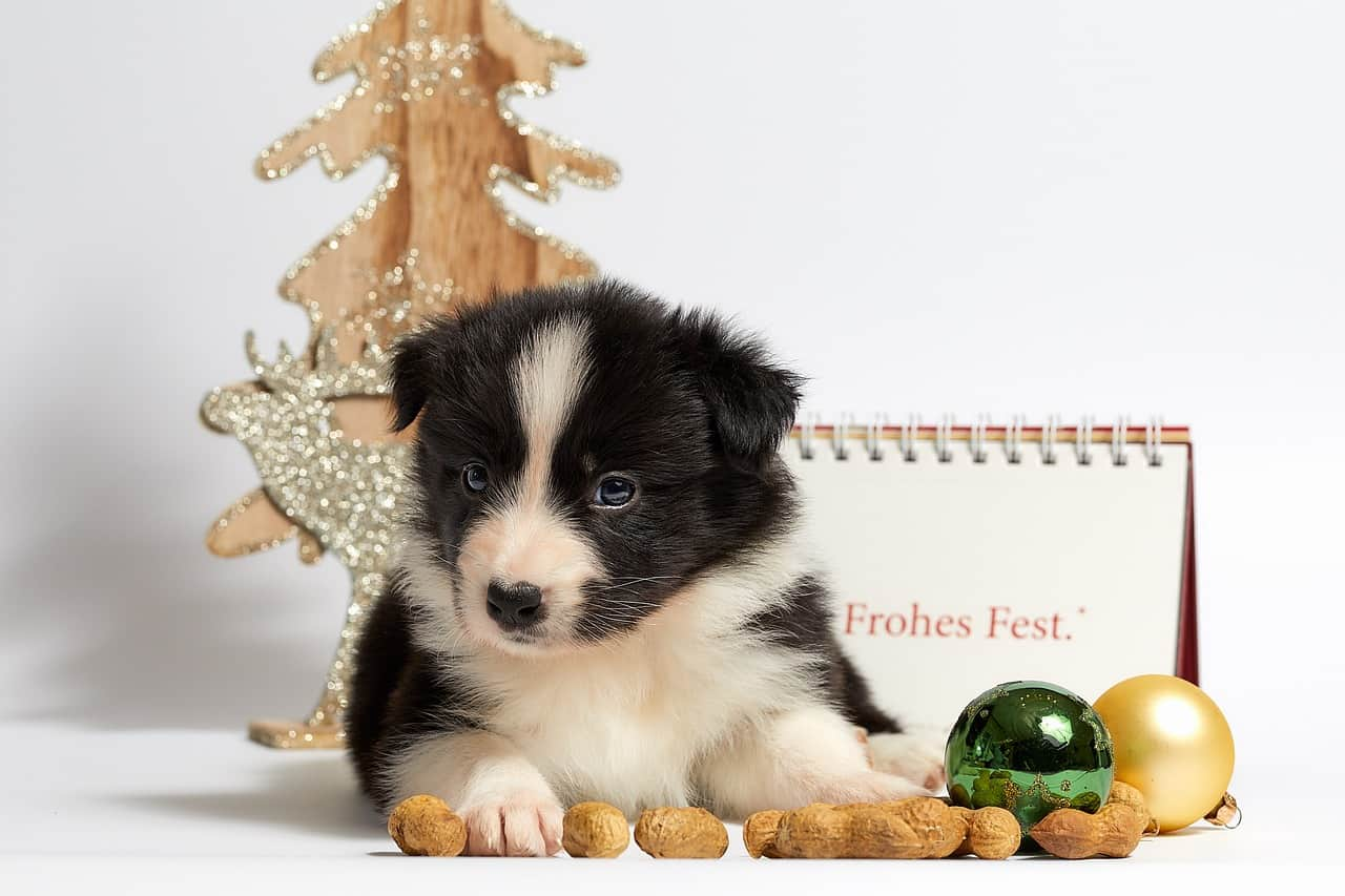 Christmas Stocking Stuffer Ideas for Pets | Looking for Stocking Stuffers? Here are more than 50 Christmas Stocking Stuffer Ideas that your entire family will love. #stockingstuffers #christmasgifts #frugalgifts #Christmas #HWS #healthywealthyskinny